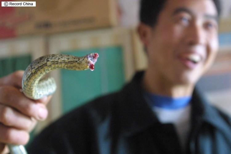 丸呑み ヘビ うっかり食べすぎて動けない哀れなヘビ現る(閲覧注意)